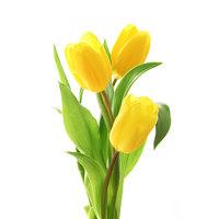 3 желтых тюльпана