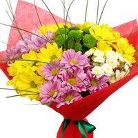 7 разноцветных хризантем