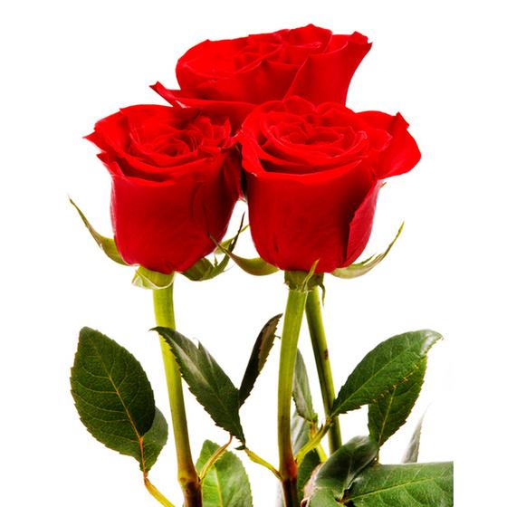 Роза в подарок что значит